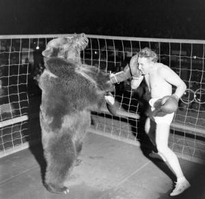 bear650
